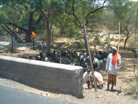 A man and a boy herding goats by the side of a road